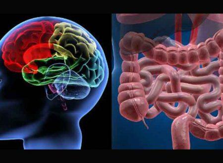 Salute & Benessere. Batteri intestinali per combattere l'ansia?